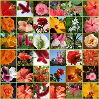 flower-collage.jpg